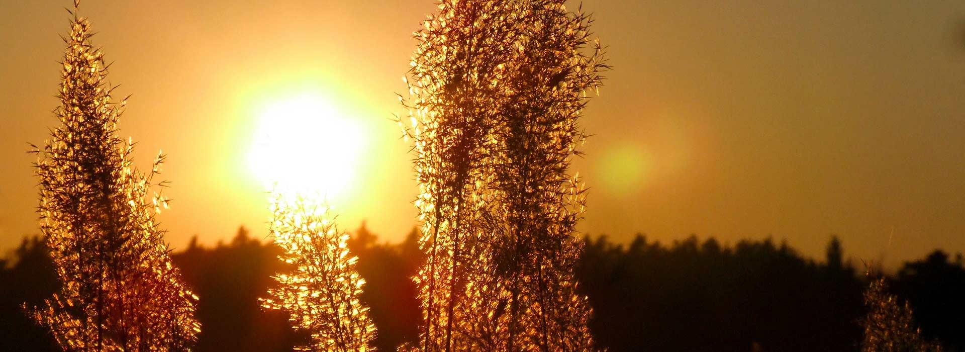 solarthermie-zur-warmwassergewinnung-neu